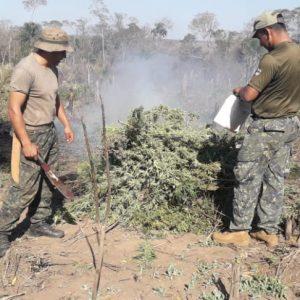 Desarticulan centros de producción del narcotráfico en Sargento José Félix López