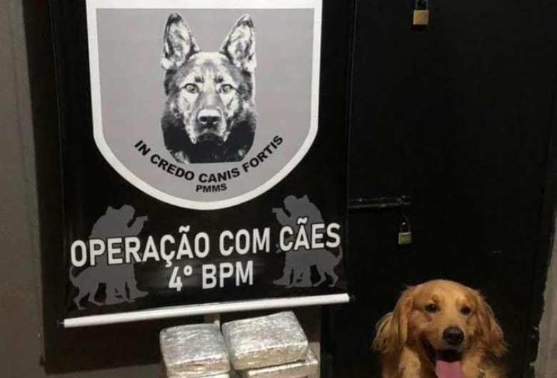 Cão detecta droga em mochila e jovem é preso por tráfico