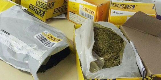 Rapaz é preso após tentar enviar 14 quilos de maconha em correspondência dos Correios