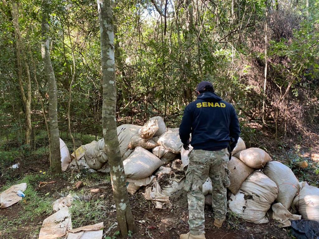 Senad incauta más de 7000kg de marihuana en zona de Bado. Una persona fue detenida
