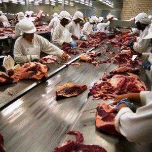 Com falta de gado em MT, frigoríficos podem fechar, diz sindicato