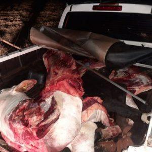 Tras persecución, abigeos abandonan camioneta cargada con carne vacuna