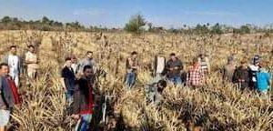 Agricultores esperan fertilizantes y semillas de autoconsumo después de las heladas en San Pedro