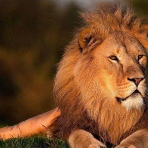 Leões matam três crianças perto da reserva natural na Tanzânia