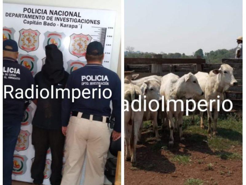 Agentes de Investigaciones de Capitán Bado/Karapaí recuperan en Canindeyú ganado robado