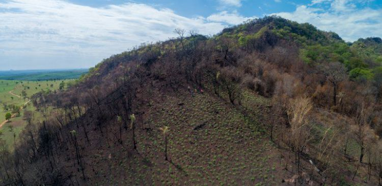Tierras de Jasuka Venda en riesgo por invasión ecológica