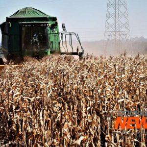 Colheita do milho entra na reta final em Mato Grosso do Sul