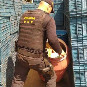 Caminhão com mais de 900 quilos de maconha foi apreendido pelo DOF