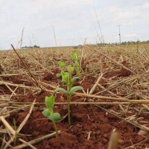 Soja opera estável em manhã de 5ª feira de altas para todas as commodities agrícolas
