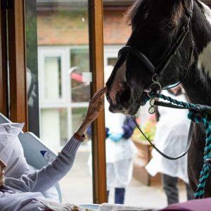 Mulher em estado terminal recebe visita inesperada dos seus animais